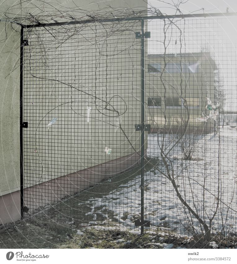 Behind grids Wall (building) out Building School Wire netting Fence Barrier Creeper Tendril Wire netting fence Deserted Safety Detail Wire fence Border Facade
