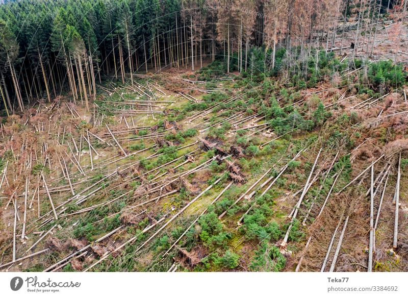 #Forest Storm damage 2 storm damage Tree trees aerial photograph Gale trunk Wood Coniferous forest Hurricane obliquely roots branches