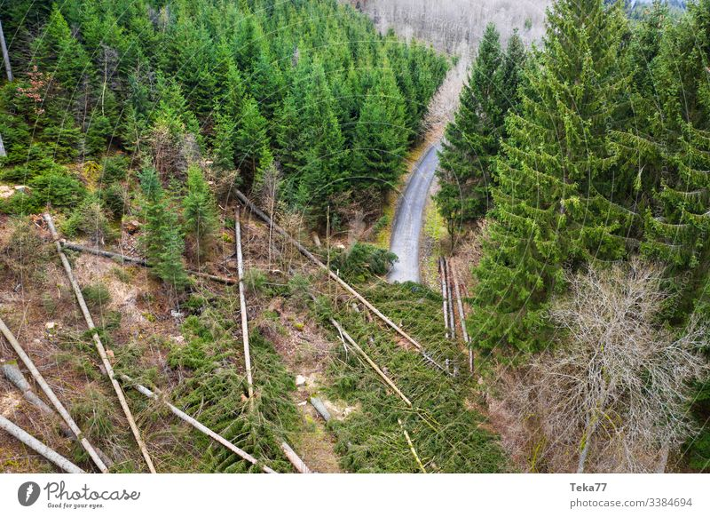 #Wald Storm damage road Forest storm damage Tree trees aerial photograph Gale trunk Wood Coniferous forest Hurricane obliquely roots branches Street forest path