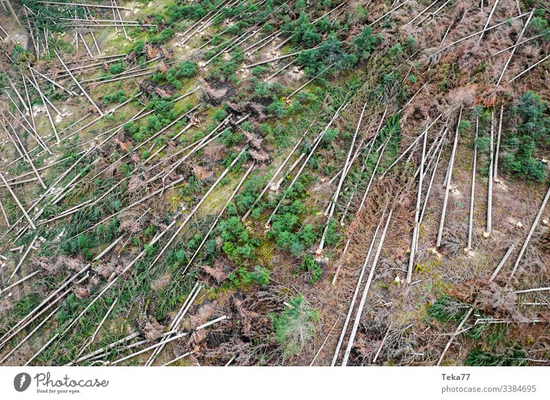 #Forest storm damage 1 Tree trees aerial photograph Gale trunk Wood Coniferous forest Hurricane