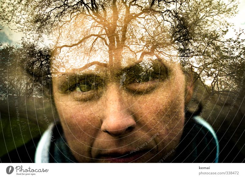 Helgiland | Thriving tree Human being Feminine Woman Adults Life Head Eyes Nose Mouth 1 30 - 45 years Environment Nature Landscape Plant Beautiful weather Tree
