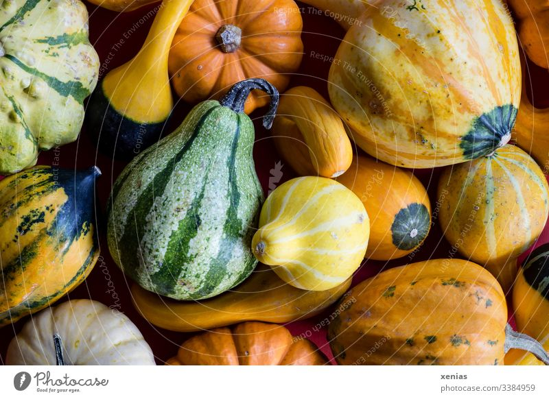 Decorative pumpkins in yellow, green and orange Pumpkin ornamental pumpkin Green Yellow Orange fruits Autumn Decoration Thanksgiving Hallowe'en Nature seasonal