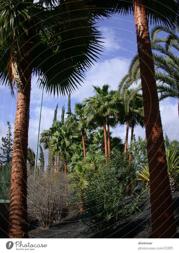 Nature Vacation & Travel Palm tree South