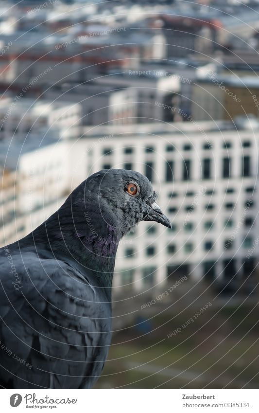 Dove sits at the window in front of skyscrapers in Berlin Pigeon Profile feathers High-rise Beak leipziger place Flying Height City centre Freedom Bird