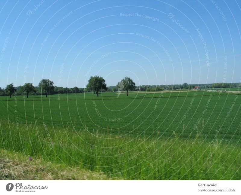 Field with trees Vacation & Travel Environment Nature Landscape Sky Spring Summer Plant Tree Grass Meadow Street Driving Blue Green Motor vehicle Lawn