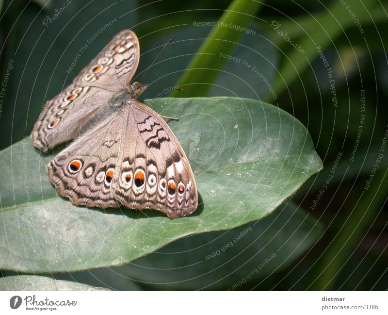 butterfly Butterfly Animal Nature