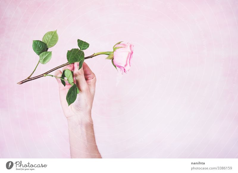 Man's hand holding a pink rose male new masculinity maschile man arm delicate fragile mood moody sensive sensitive touch soft pink color gender role flat