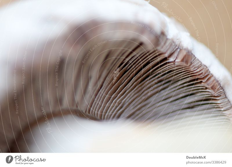 Mushroom lamellae to be seen in detail mushroom slats detailed view Nature Detail Deserted Close-up Macro (Extreme close-up) Brown Subdued colour