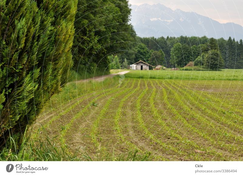 Cultivated area and haystacks off the Alps Mountain Agriculture Hayrick Bavaria Snow slips trees furrows extension Nature Sky Clouds Landscape Exterior shot Day