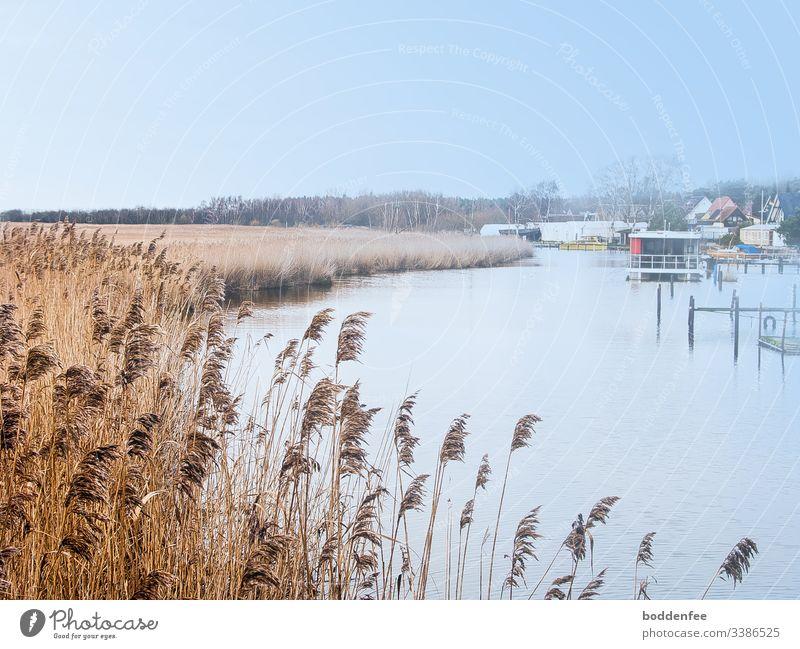 Schilf im Winter am Fluss kalt Ruhe