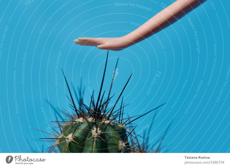 doll hand touches the cactus spines close-up. blue background with copy space plant concept toy child model object pattern green fun dangerous composition sharp