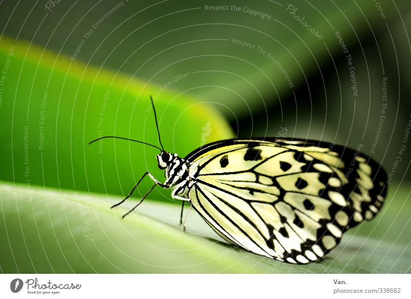Nature Green White Plant Animal Leaf Wild animal Wing Butterfly