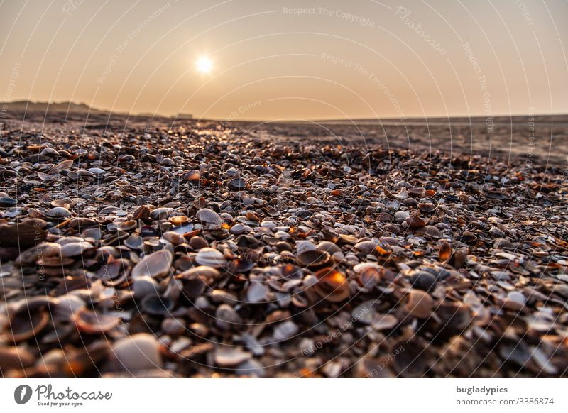 Mussels on the beach from the frog's perspective at sunset seashells Beach Ocean Coast North Sea Sunlight Sunset Nature Sand Vacation & Travel Exterior shot