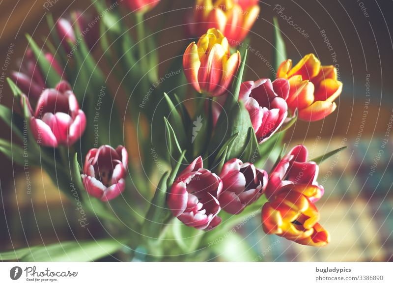 Colourful tulip bouquet in vase from above bouquet of tulips Tulip Tulip blossom Blossom Spring Plant Interior shot Day Blossoming Colour photo Vase