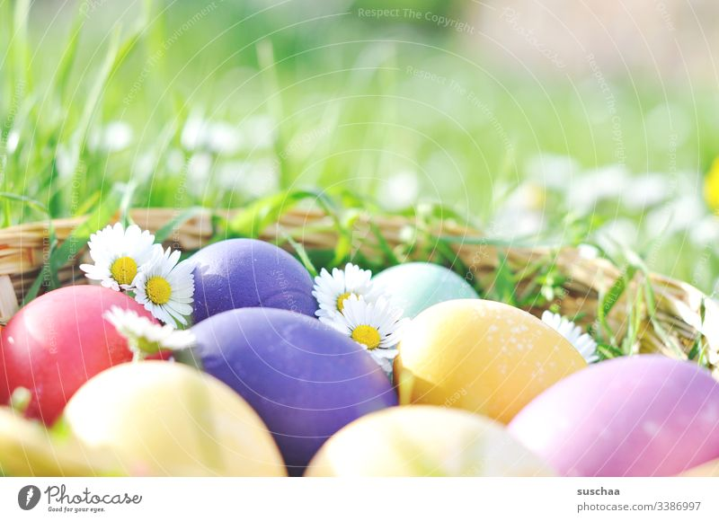 colourful easter eggs with daisies Easter Easter eggs Spring Decoration Exterior shot Public Holiday Festive Flower Tradition Feasts & Celebrations boiled eggs