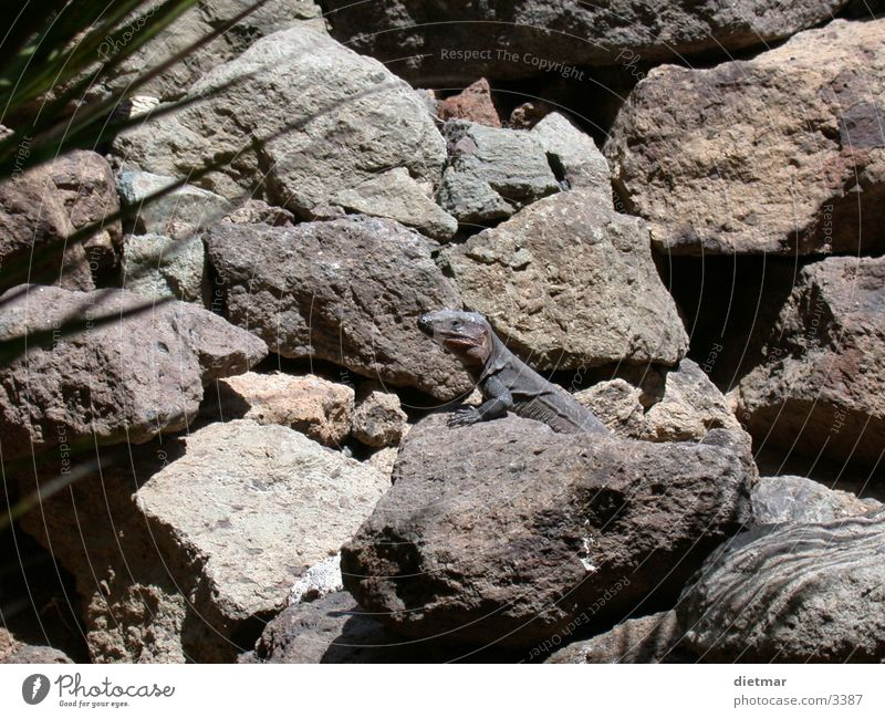 Nature Animal Reptiles Lizards