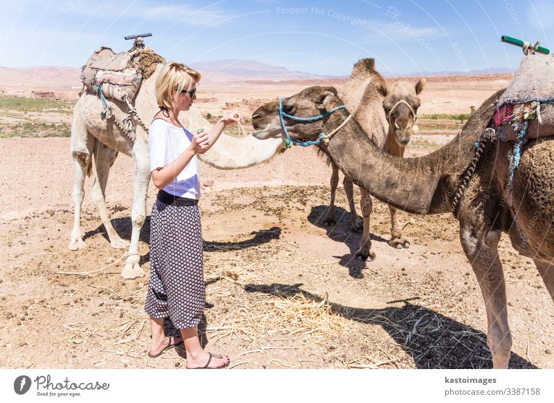 Young woman with a camels in Morocco. female dromedary pet desert girl adventure animal arabia caucasian destination dunes egypt lady mehendi morocco nomad