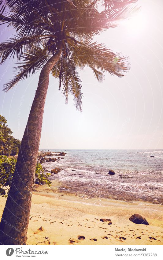 Tropical beach with coconut palm tree against the sun. summer sea ocean vacation holiday peaceful vintage retro instagram effect filtered sand sky no people