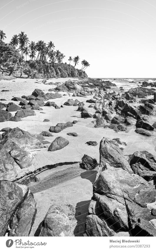 Black and white picture of a rocky beach, Sri Lanka. black and white tropical summer B&W sand sky palm no people landscape Asia