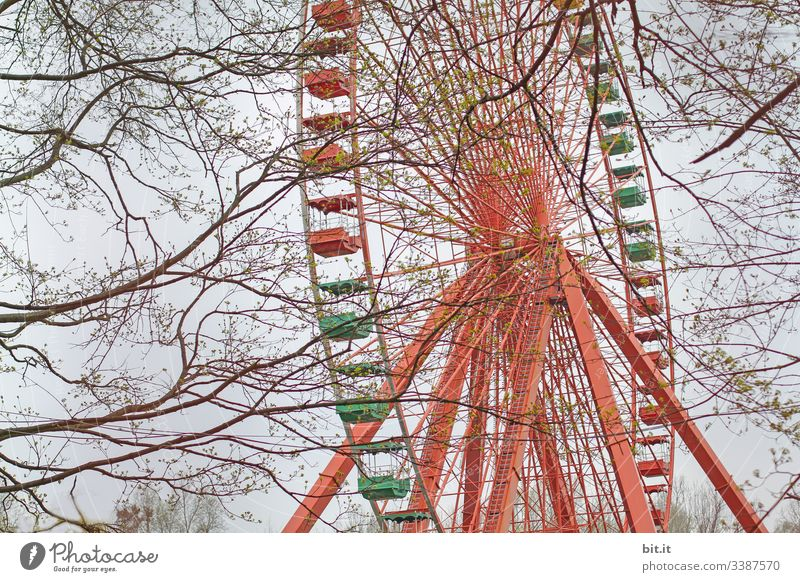 Colourful, old, empty Ferris wheel turns between branches, twigs and trees in the closed amusement park in Plänterwald, Spreepark, Treptow, Berlin. Event