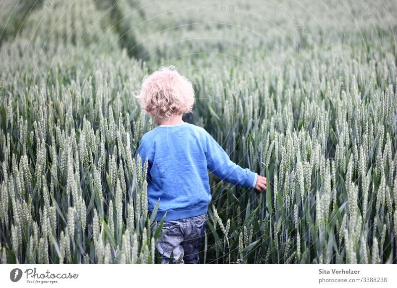 Little boy in a cornfield Playing Summer Child Toddler Boy (child) Infancy 1 Human being 3 - 8 years Nature Wheatfield Field Blonde Curl Touch Discover Free