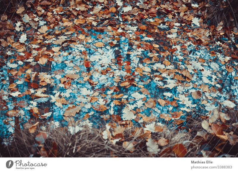 Foliage in a puddle foliage Autumn Rain Puddle Water Reflection Street flaked Weather Wet Nature Deserted Exterior shot Bad weather Environment Damp Climate