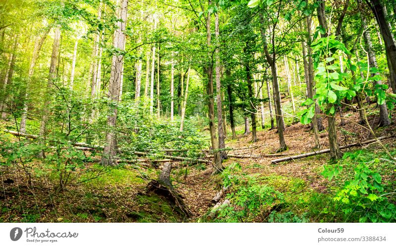 View in green forest season tree scenery summer park nature environment landscape spring view wood sunny natural sunlight fresh scenic outdoor beautiful trunk
