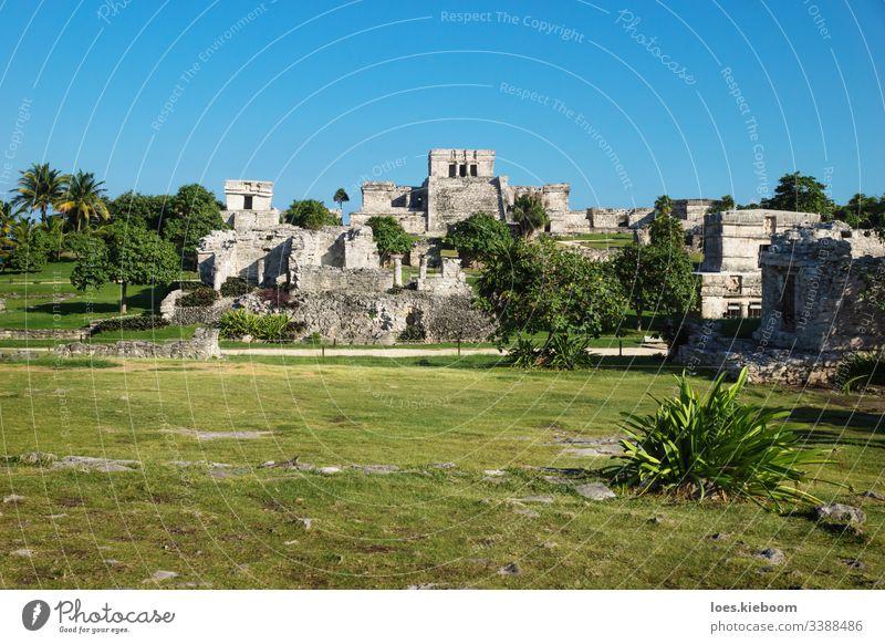 El Castillo at Maya ruins with tropical plants, Tulum, Mexico tulum mexico ancient caribbean culture old yucatan maya stone temple civilization mayan mexican