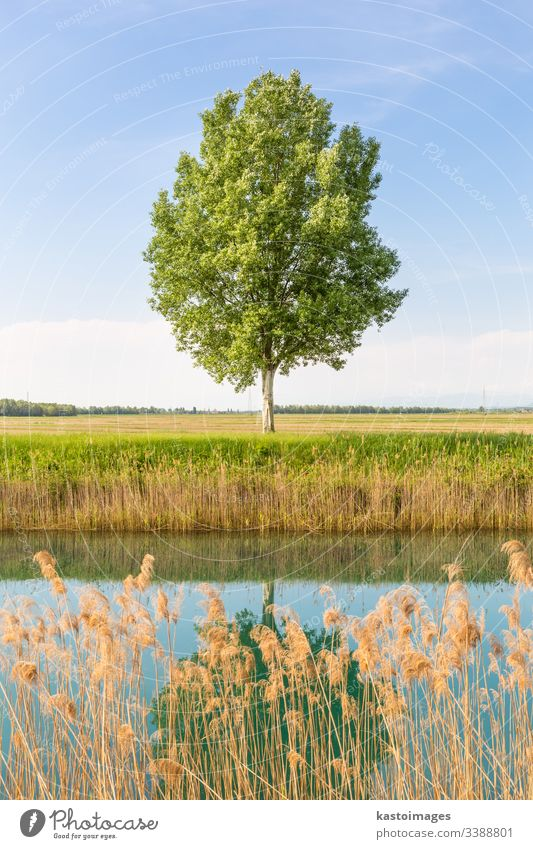 Green tree in the field by river. meadow grass green landscape nature sky background horizon natural summer sunny big branch single countryside environment