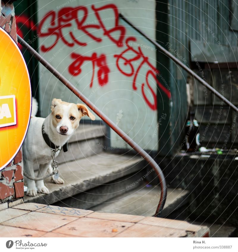 Will finally go for a walk Wall (barrier) Wall (building) Stairs Entrance Animal Pet Dog 1 Observe Sadness Wait Authentic Graffiti Dog lead Chained up Patient