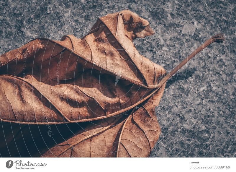 autumn foliage Leaf Maple leaf Maple tree Autumn Winter Colour photo Plant Deserted Day Environment Exterior shot Tree Nature Detail Autumnal Autumnal colours