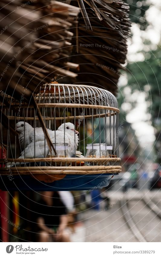 White birds in a nice cage outside at the roadside in South East Asia Captured Cage pretty Pet Street bokeh Blur Decoration Poultry two lattice bars jail