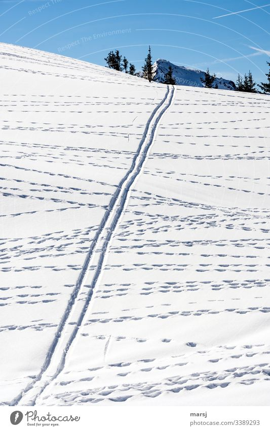 Game tracks crossing a ski track in the snow Snowscape Ski tracks wildlife trails Parallel Snowcapped peak Cross Muddled Blue background Blue sky Winter sports