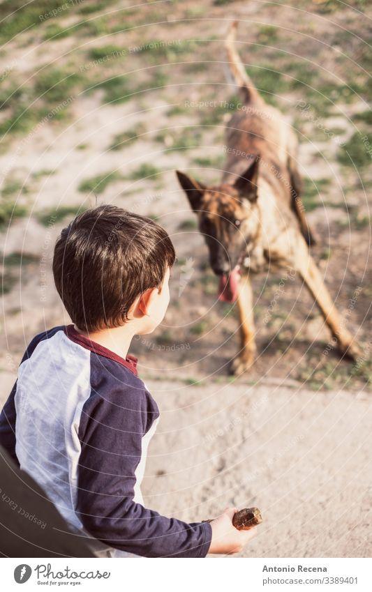 Boy playing throwing a stick at his dog boy plays dogs kid belgan shepherd danger animal pet two 4s 5s child children backyard outdoors spring lifestyles