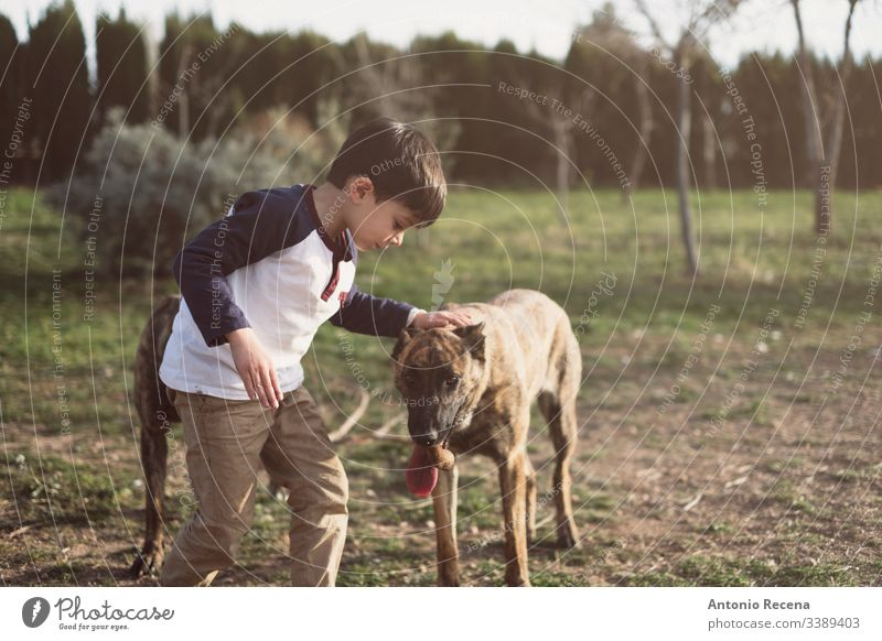 Child kindly caresses his dog boy plays dogs kid belgan shepherd danger animal pet two 4s 5s child children backyard outdoors spring lifestyles rear view back