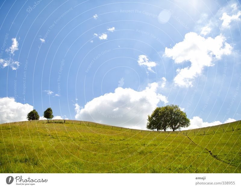 sinusoidal curve Environment Nature Landscape Plant Sky Sunlight Spring Summer Beautiful weather Tree Bushes Meadow Field Natural Blue Green Colour photo