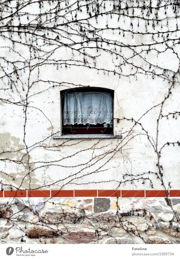 A small window with gardiene in a wall overgrown with wild wine in winter Window Architecture House (Residential Structure) Facade Building Deserted