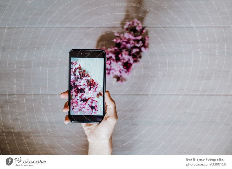 woman taking a picture of beautiful pink almond tree flowers indoors. Technology and springtime concept mobile phone technology camera screen hand blooming