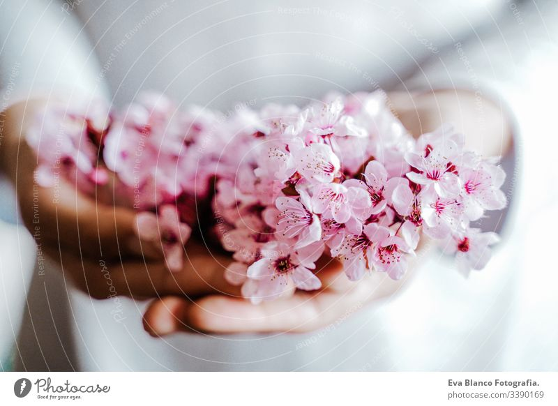 unrecognizable woman holding a bouquet of almond tree flowers indoors. pink blossom. Springtime concept hands blooming springtime lifestyle nature close