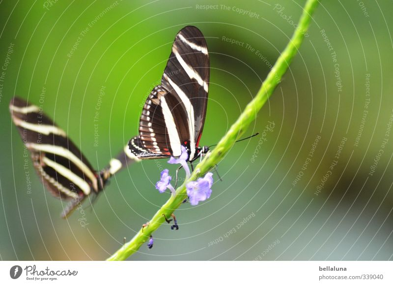 Nature Beautiful Plant Summer Flower Animal Grass Spring Flying Sit Wild animal Bushes Beautiful weather Wing Animal face Insect
