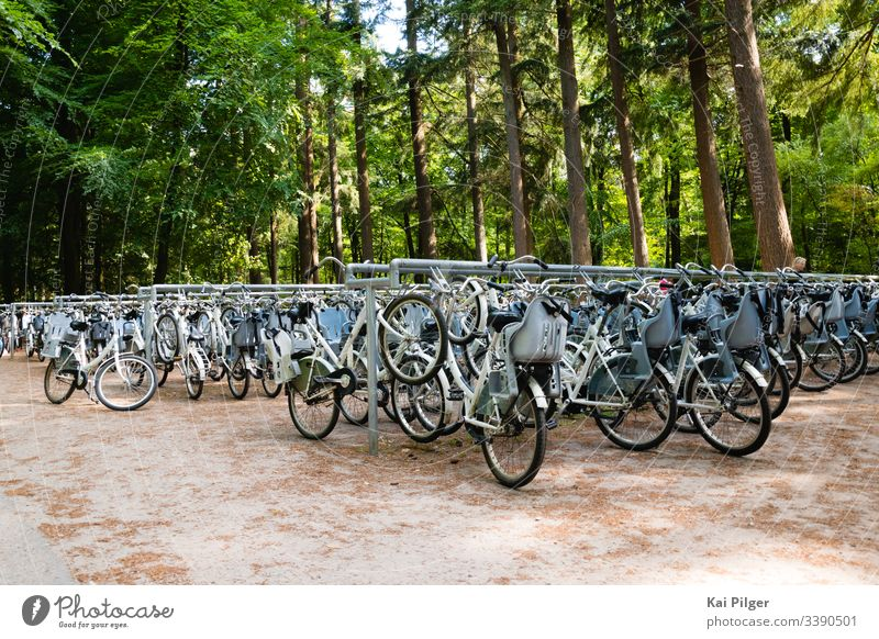 Dozens of bikes are parked in the Dutch national park De Hoge Veluwe active bicycle bicycles biking day de hoge veluwe dutch europe forest green healthy