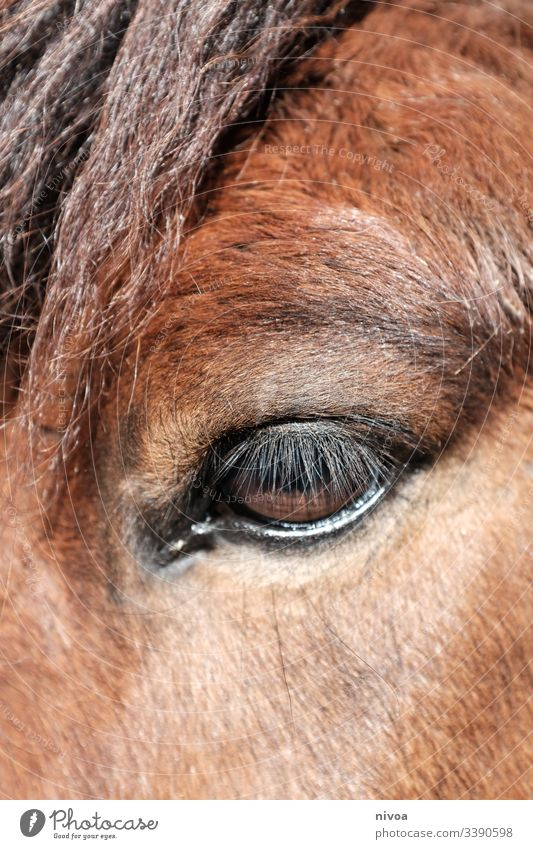 horse's eye Iceland Pony Horse Detail Eyes Animal Colour photo Exterior shot Day 1 Animal portrait Farm animal Deserted Mane Wild animal Natural Nature Stand
