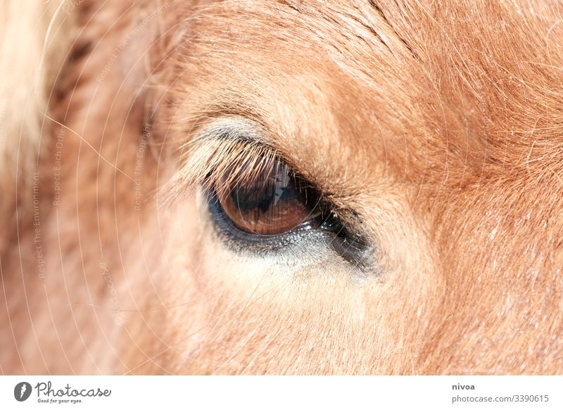 horse's eye Iceland Pony Horse Detail Eyes animal eye Animal Bangs Colour photo Exterior shot Day Animal portrait Farm animal Nature Wild animal Mane Deserted