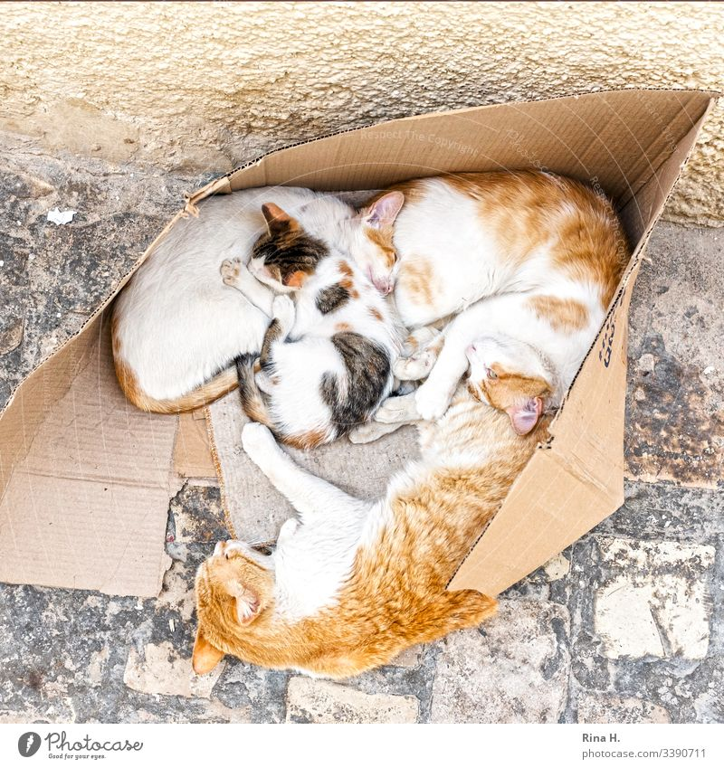 Cat family ( Hartz IV ) cat family cats Cuddling Kitten at home arm out Footpath Pet Domestic Cute