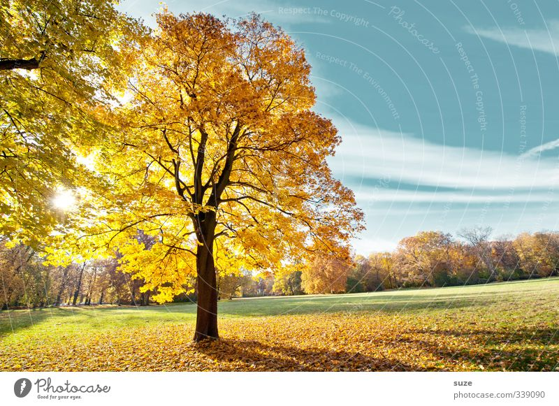 Little Son Brilliant Environment Nature Landscape Plant Sky Autumn Climate Weather Beautiful weather Tree Park Meadow Exceptional Friendliness Blue Yellow Gold