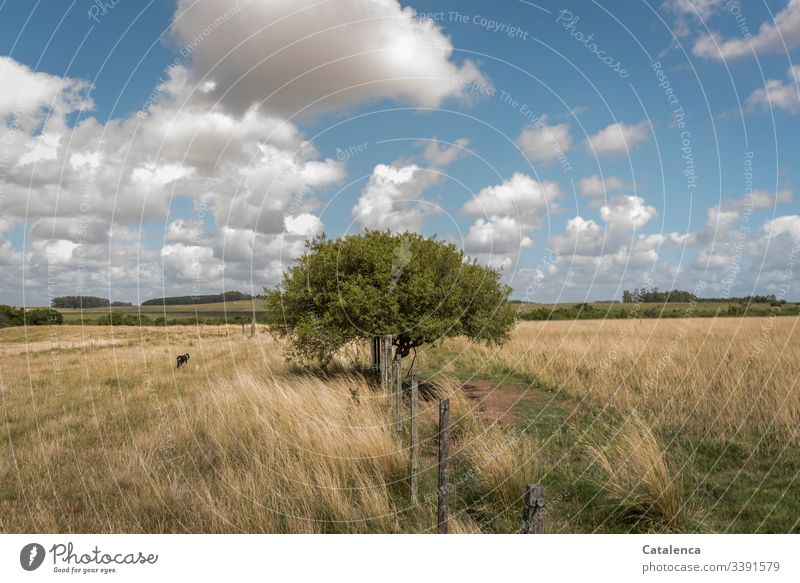 A tree grows at the pasture fence in the grassland, clouds of sheep are passing by in the sky, a dog runs past, it is summer Fence Pasture fence Grassland Pampa