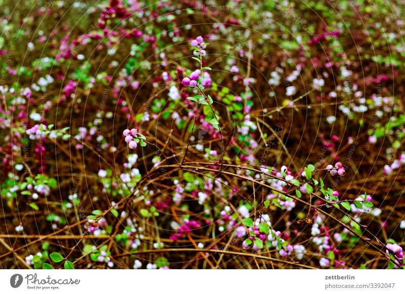 Hedge in spring Garden Spring Blossom blossom vegetation thickets Branch Twig background Copy Space Deserted Spring flowering plant allotment garden colony