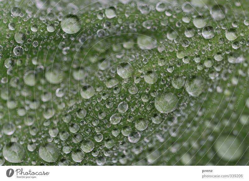 drop landscape Environment Nature Weather Rain Leaf Gray Green Drop Many Drops of water Colour photo Exterior shot Close-up Macro (Extreme close-up)