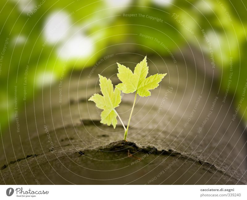 Nature Green Beautiful Plant Tree Leaf Forest Emotions Spring Small Bright Natural Friendship Together Growth Beautiful weather