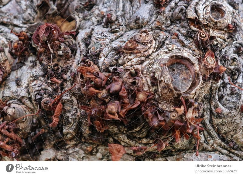 Old tree bark Wood Tree bark Change Destruction Environmental protection Survive Tree trunk Force Death Divide Brown Dry Gloomy Natural Dark Creepy